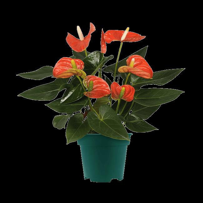4501_Sierra Orange_14cm_2 (Large)