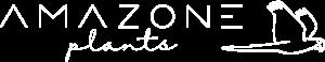 Amazone Plants Anthurium