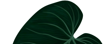 leaf-top