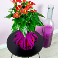Aristo Anthurium - Amazone Plants