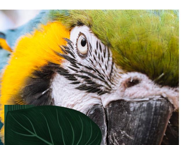 leaf-parrot