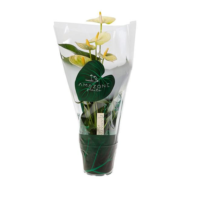 Vanilla 20190904SA-49-12cm-P3