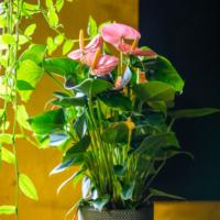 Amazone Plants (1)