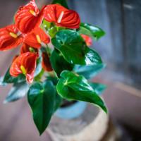 Amazone Plants (10)