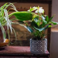 Amazone Plants (6)